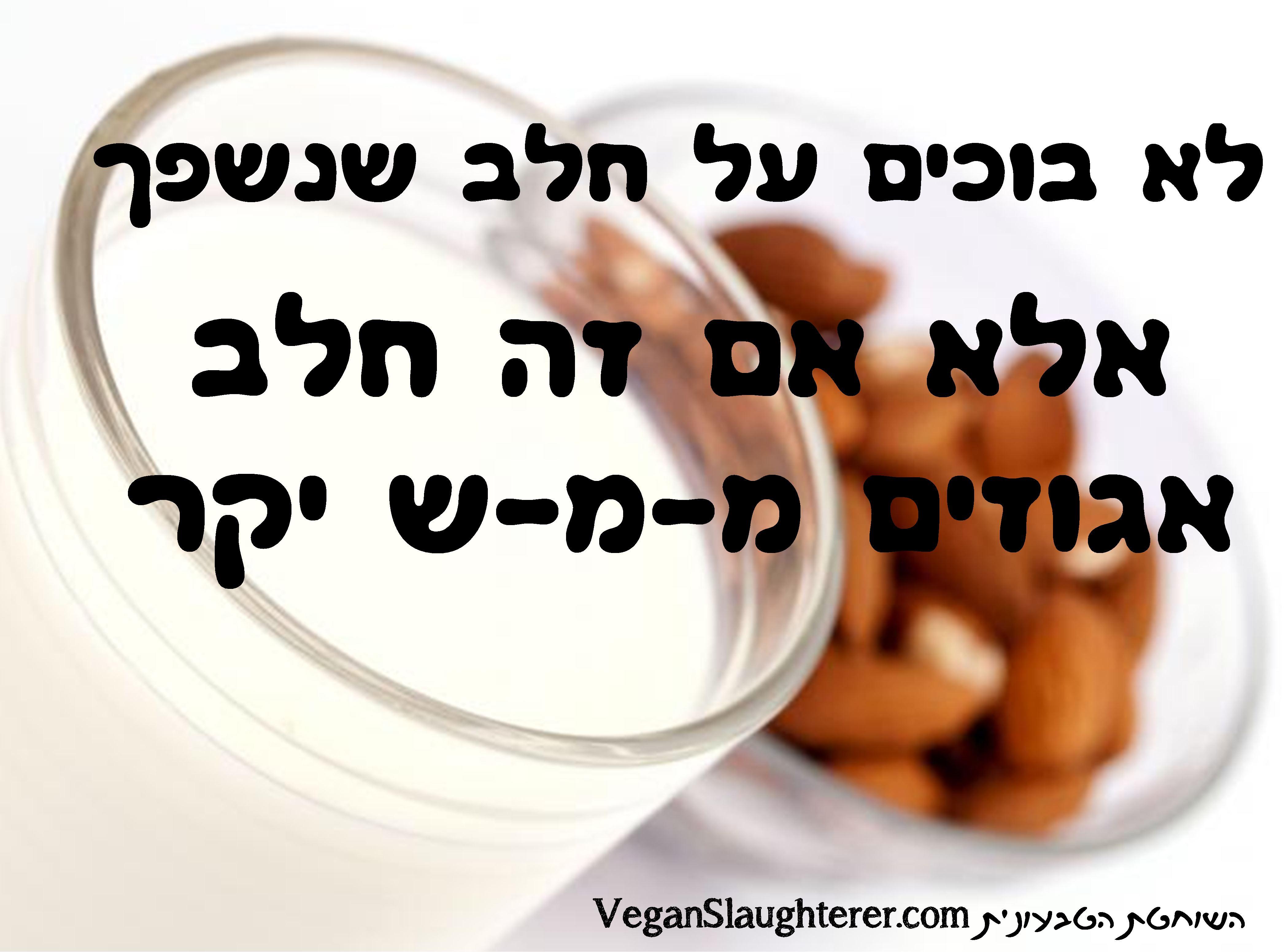 לא בוכים על חלב שנשפך, אלא אם זה חלב אגוזים ממש יקר. הומור טבעוני, בדיחות מתכונים טבעוניים של השוחטת הטבעונית יעלי שוחט